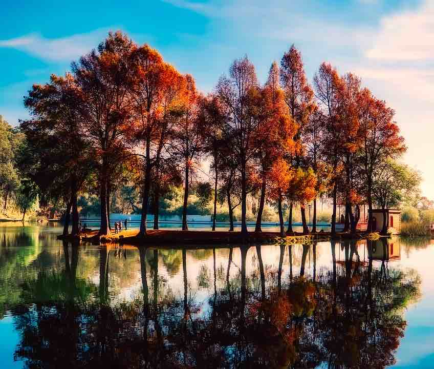autumnal trees by a lake