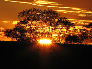 Australian outback at sunset