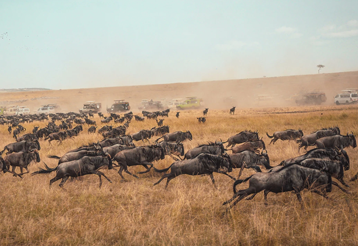 Masai Mara Reserve, showing vast plains and wilderbeast running